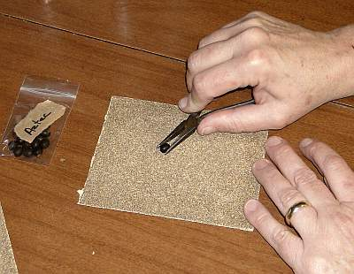 Canna seeds require special preparation before planting.